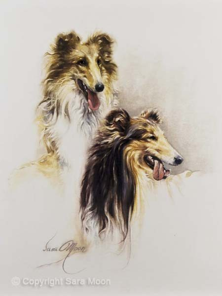 """Friends"" (Collie Dogs) by Sara Moon"