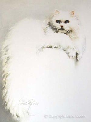 'White Persian Cat' by Sara Moon