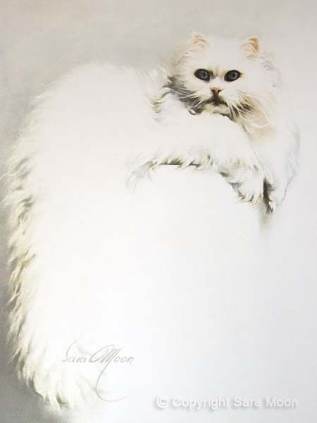 """White Persian Cat"" by Sara Moon"