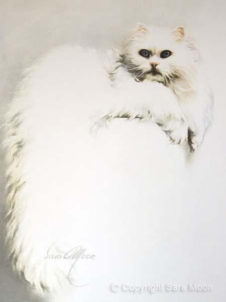 White Persian Cat by Sara Moon